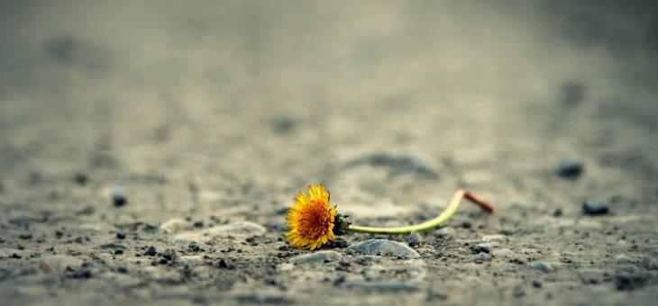 El Reiki en tiempos de crisis emocional